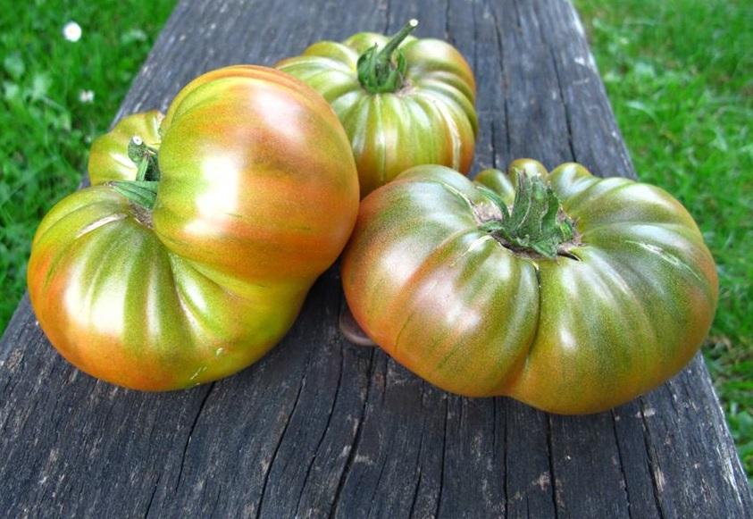 20 graines//seeds//semillas Copper River tomate//tomato
